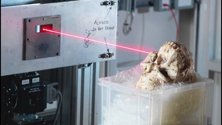 High-Tech Scans of Early Human Ancestor Provides Rare Look At Critical Juncture in Mankind's Evolutionary Past