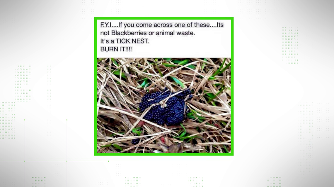 VERIFY: Does this photo show a nest of tick eggs?