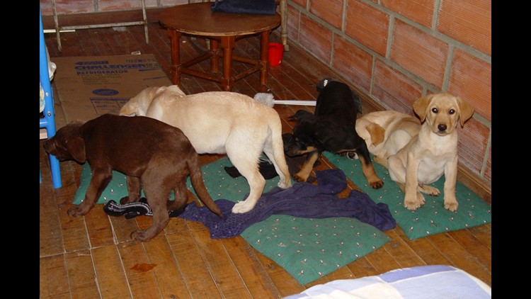 NY  vet accused of smuggling heroin in puppies arrested