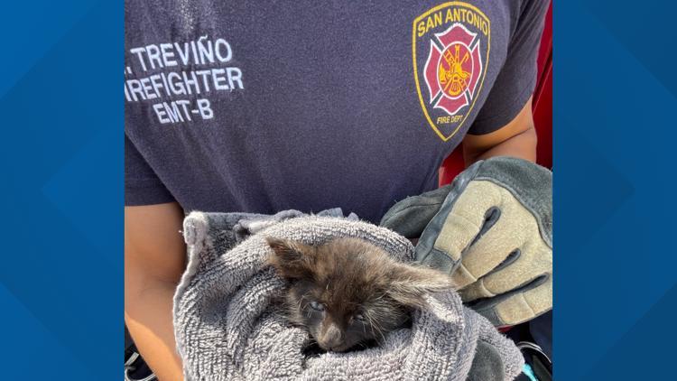 San Antonio firefighters rescue kitten, name her Selena