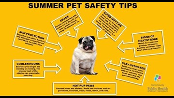 11 tips to keep your pets safe in this sizzling summer heat