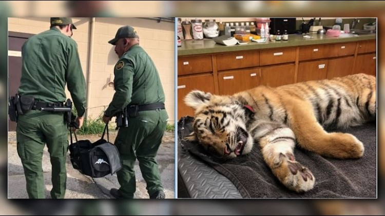 Border patrol agents find tiger cub stuffed in abandoned duffel bag
