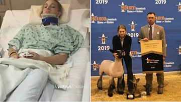 True grit: Texas teen goes from 'mangled' mess to grand champion at Houston Livestock Show