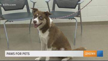 Paws for Pets: Corpus Christi Aug. 14th