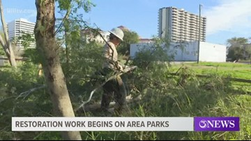 City outlines plans to remove non-native plants from Blucher Park