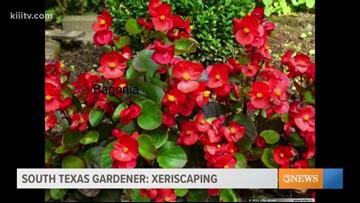 STX Gardener; Xeriscaping steps to prepare