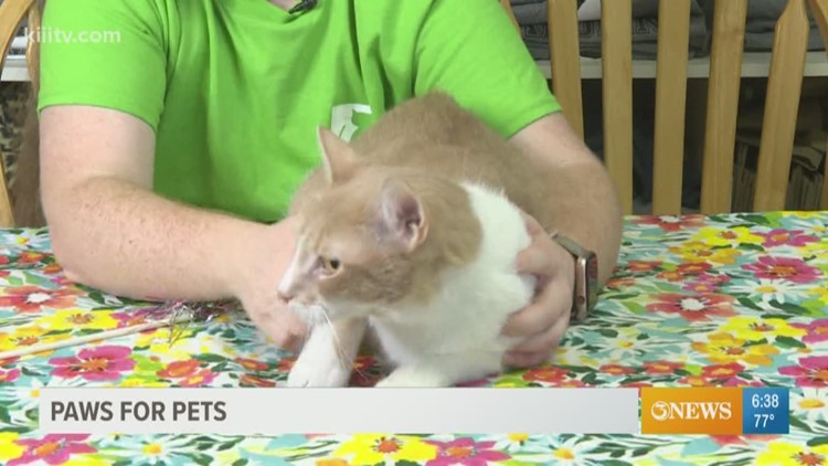 Adopt Ernie on Paws for Pets