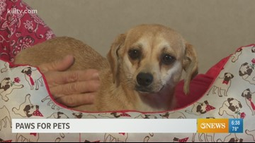 Adopt Nancy on Paws for Pets