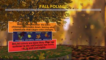 WEATHER BLOG: Fall foliage