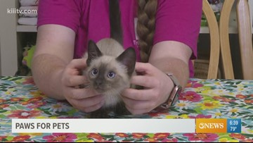 Adopt Bear Claw on Paws for Pets