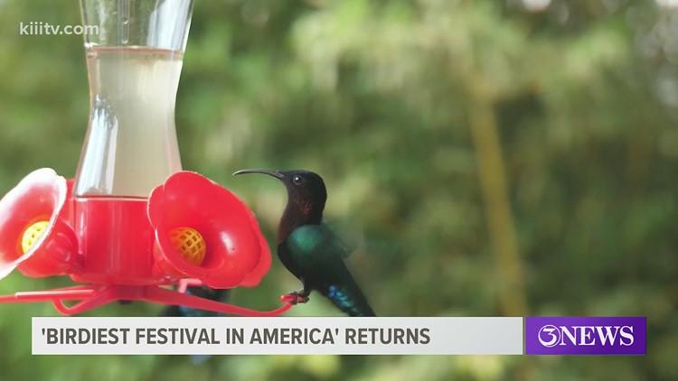 'Birdiest Festival in America' returns to South Texas