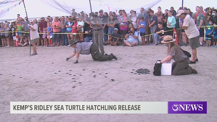 Sea turtle hatchlings released Saturday morning