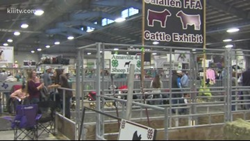 Judging held at the Nueces County Junior Livestock Show