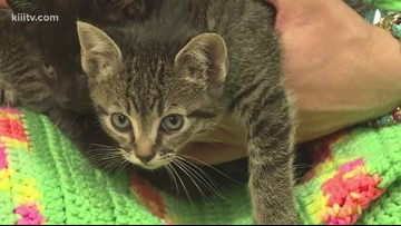Paws for Pets: Foster Kittens