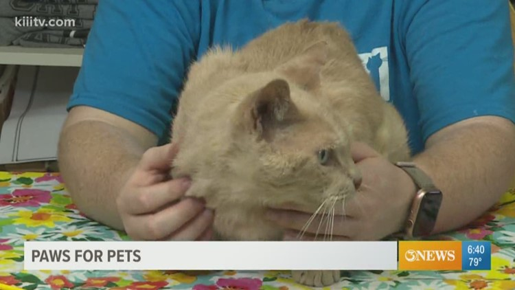 Adopt Clarence on Paws for Pets