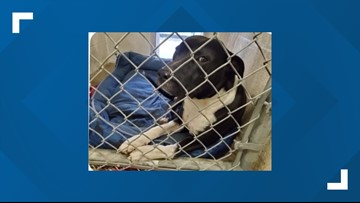 Nueces County Animal Services held successful Home for the Holidays three-day adoption event