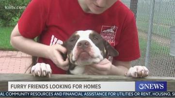 Gulf Coast Humane Society takes pet adoption operations online