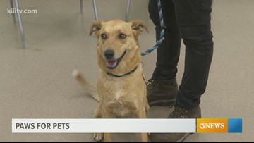 Paws for Pets: Corpus Christi May 23rd