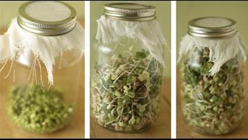 STX Gardener - Sprouts