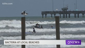 High levels of bacteria found at local beaches