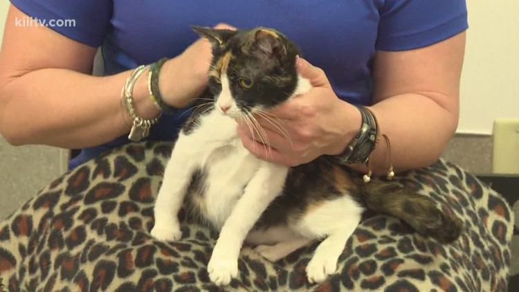 Paws for Pets: Adopt Jinx