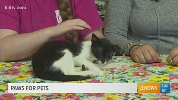 Adopt Beth on Paws for Pets