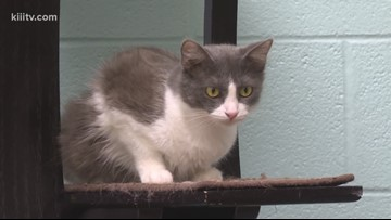 Adopt Emily on Paws for Pets