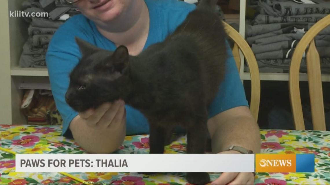 Adopt Thalia on Paws for Pets