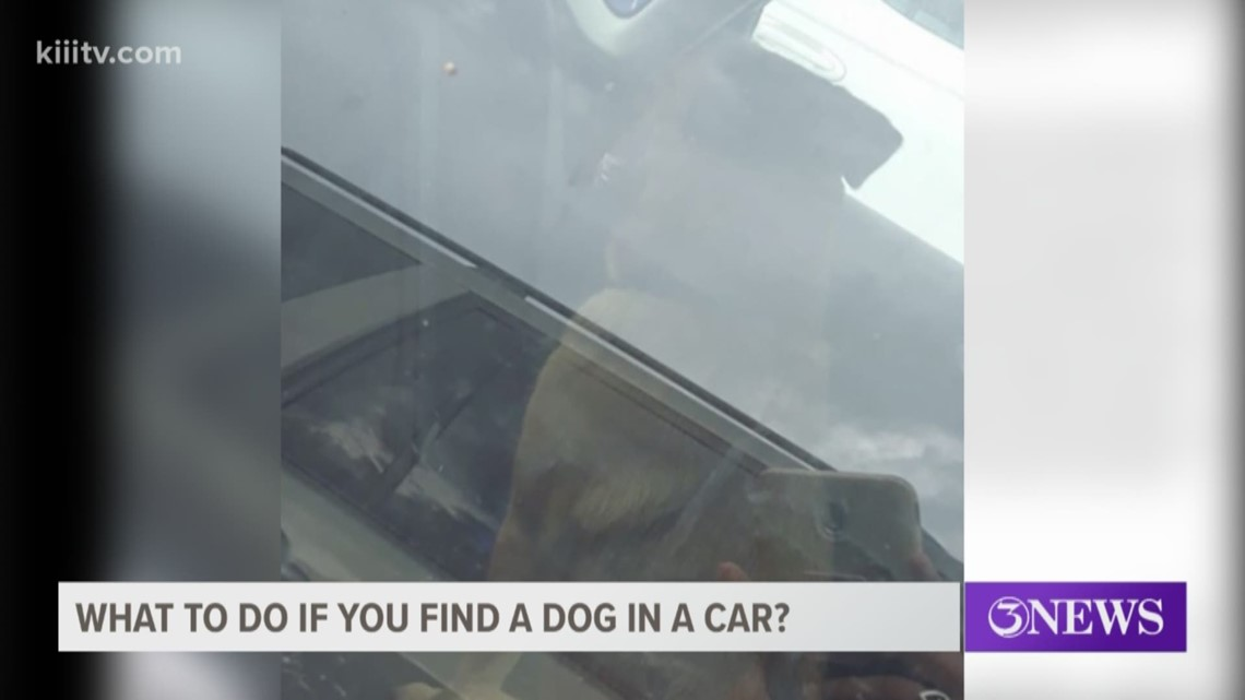 Verify: What to do if you find a dog in a car