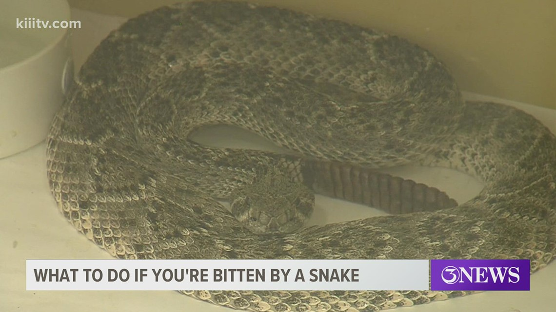 Understanding snake bites, health officials provide tips on how to stay safe