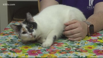 Adopt Mirabelle on Paws for Pets