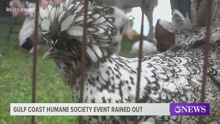 Gulf Coast Humane Society moves event indoors due to impeding weather conditions