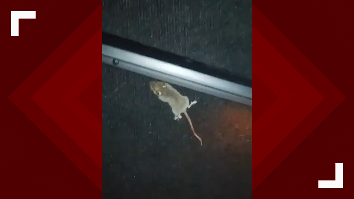 Mouse captured on video at AMC Theater, health department investigating