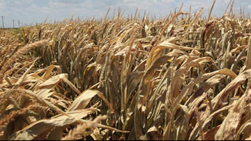 Coastal Bend farmers eligible for emergency farm loans due to drought