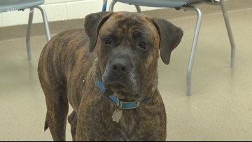 Adopt Titan on Paws for Pets