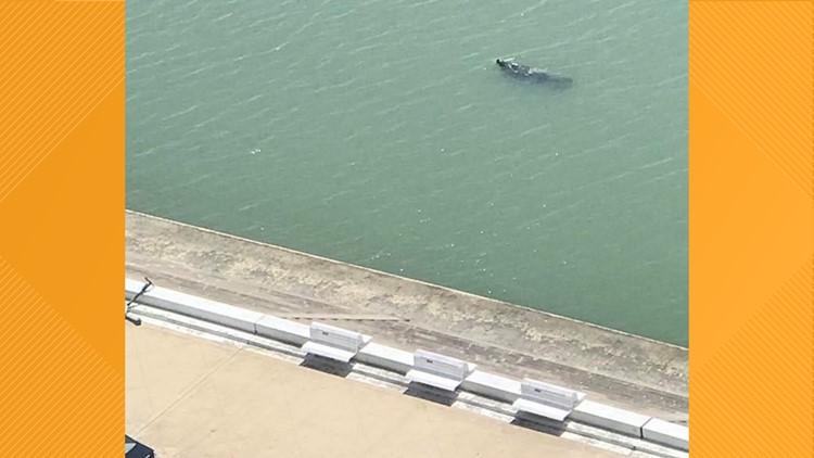 Manatee spotted in Corpus Christi Marina