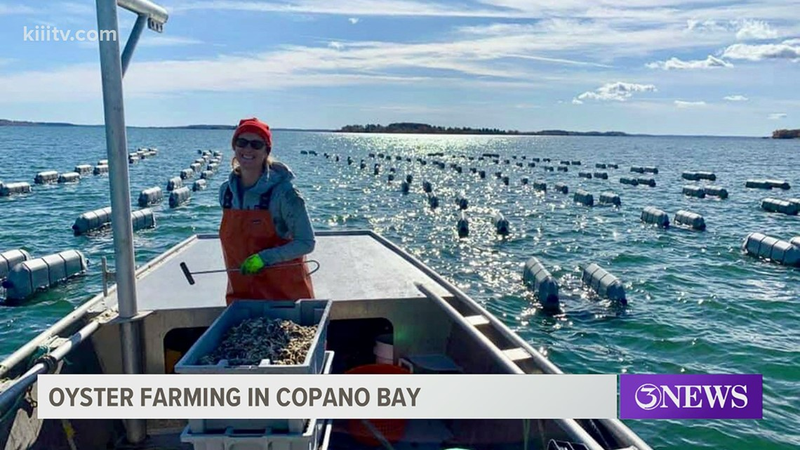 Water Street Oyster Bar owner gets permit to begin oyster farming in Copano Bay