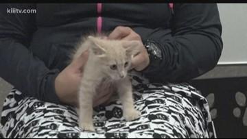 Paws for Pets: Adopt Alex