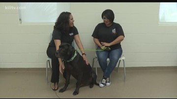 Adopt Atlas on Paws for Pets