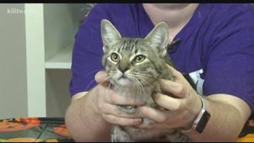 Adopt Maggie on Paws for Pets