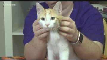 Paws for Pets: Adopt Junie