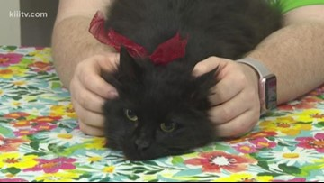 Adopt Gertrude on Paws for Pets
