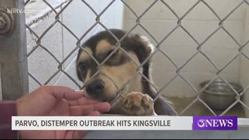 Kingsville pet adoption event canceled due to parvo, distemper outbreak