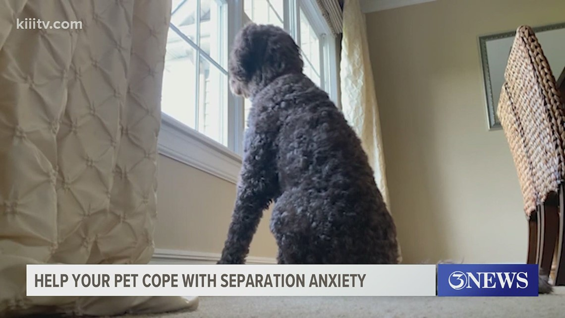 How to help your pet cope with separation anxiety