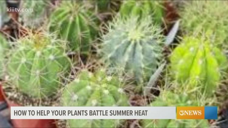 South Texas Gardener - South Texas heat