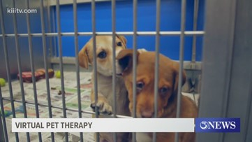 Gulf Coast Humane Society hosts 'Virtual Pet Therapy' on Facebook Live
