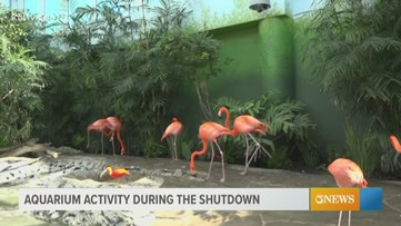 Life without guests for wildlife at the Texas State Aquarium