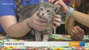Adopt Camden on Paws for Pets