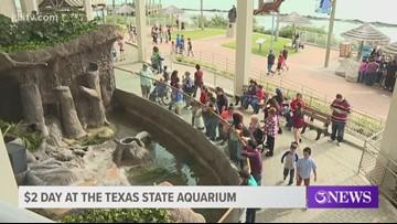 Texas State Aquarium hosts Community Day, presented by Whataburger