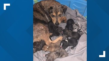 Dog rescue group from Corpus Christi saves a furry family from high kill-shelter, donations needed